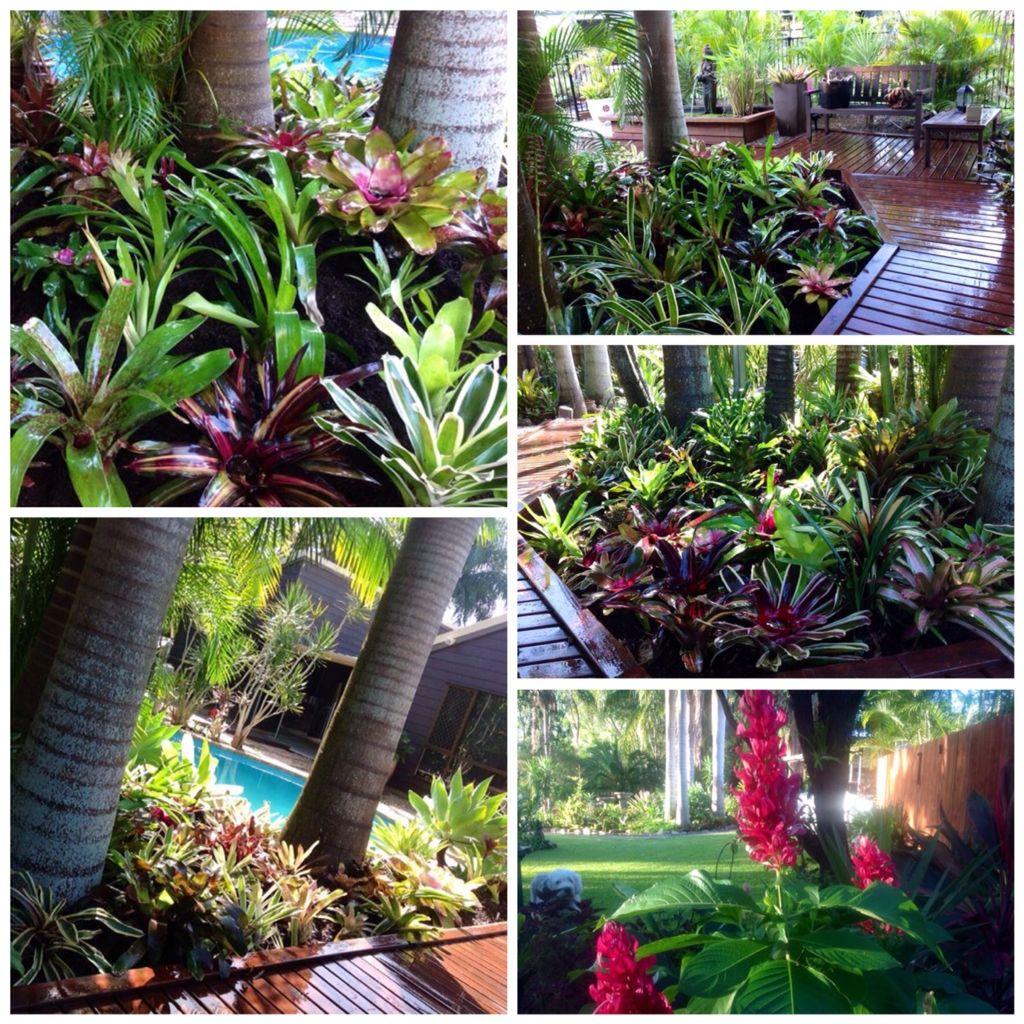 Tropical garden jard n pinterest jardines plantas for Jardin tropical plantas