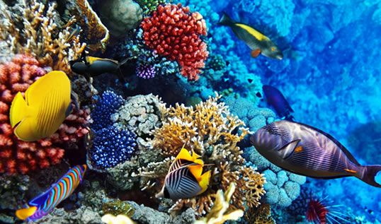 Oman is one of the best dive destinations on the planet - Like us on.fb.me/1tbQUk2