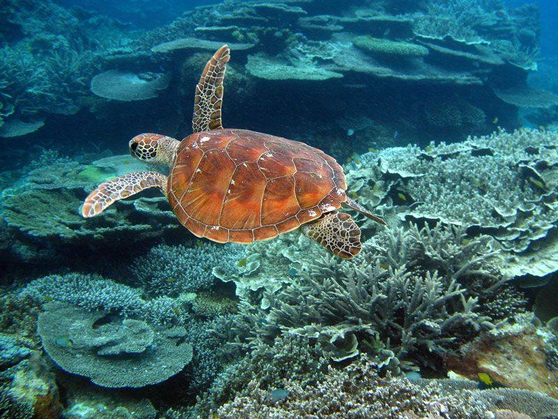 Great Barrier Reef Wallpaper Here Is The Gallery Of