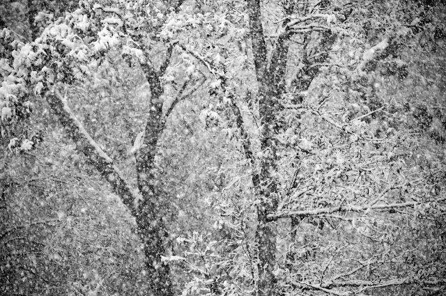 Snow falling on cedars essay
