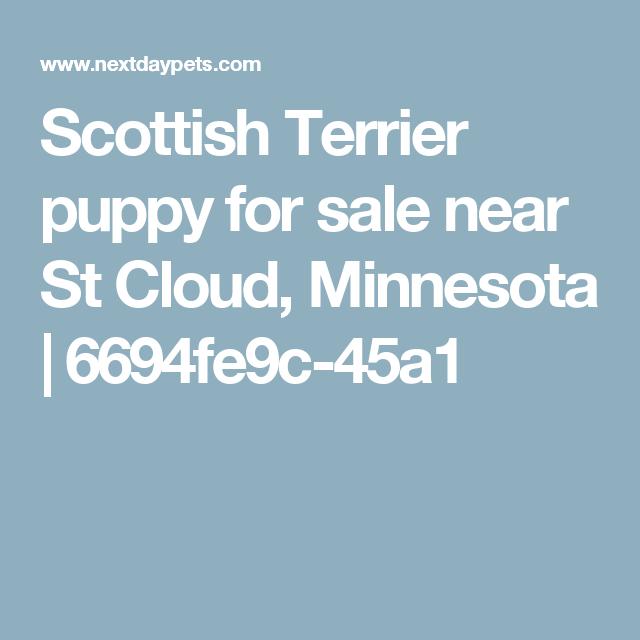 Scottish Terrier puppy for sale near St Cloud, Minnesota