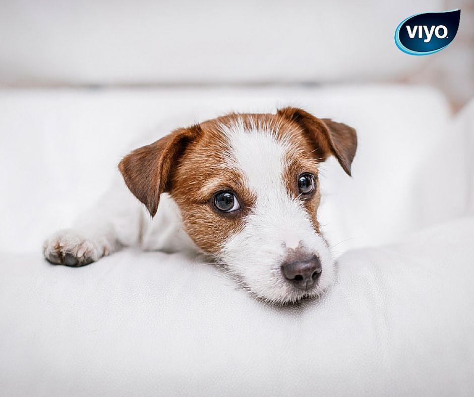 weetje: de meest populaire hondennamen zijn lola (teef) en oscar