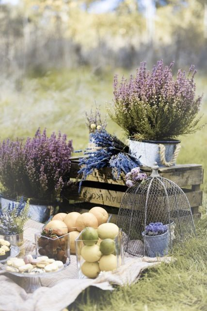 Picnic and Lavender