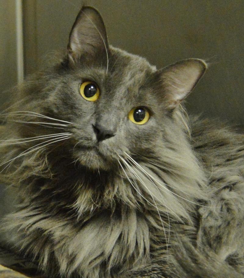 Adopt Chester on Humane society, Adoption, Animals
