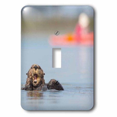 3dRose USA, California. Sea otter preening in Elkhorn Slough on Monterey Bay., 2 Plug Outlet Cover