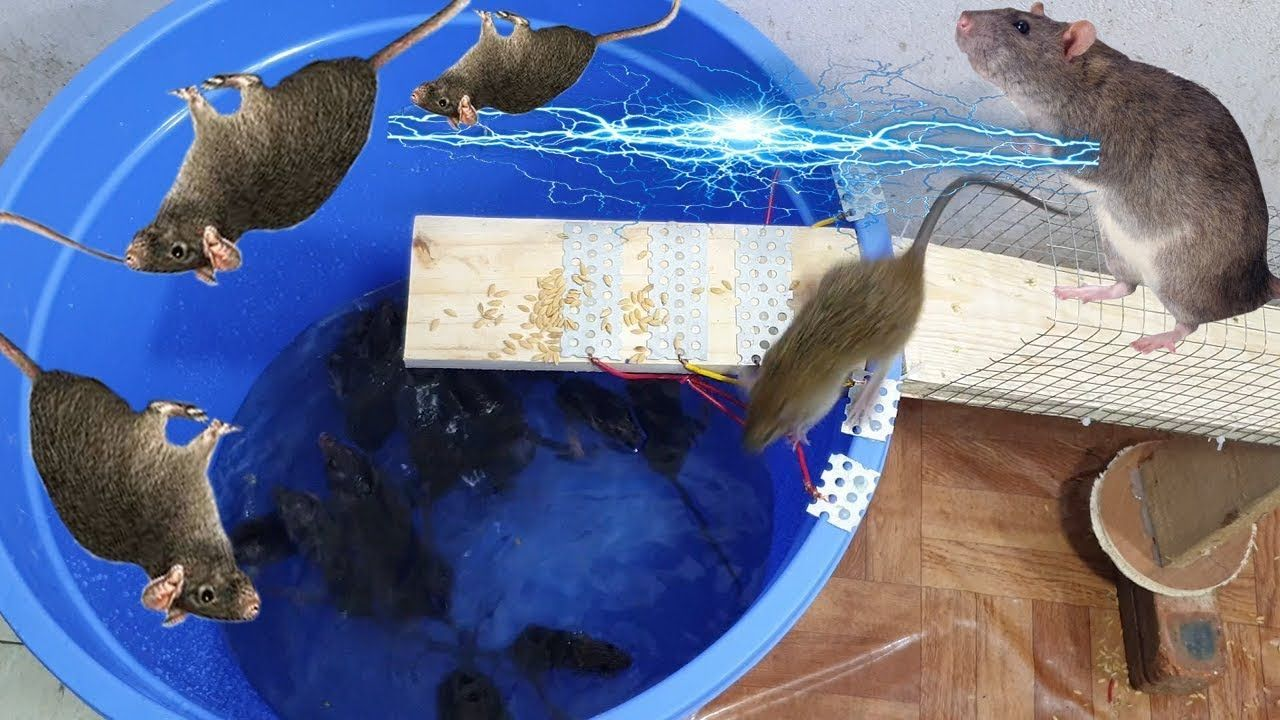 Water mouse trap / Best mouse trap 12V battery / Homemade electric mouse... #mousetrap Water mouse trap / Best mouse trap 12V battery / Homemade electric mouse... #mousetrap