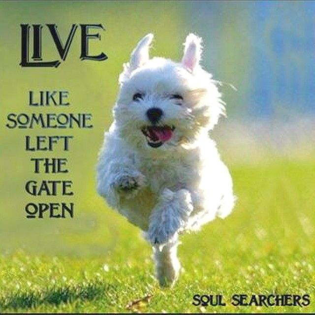 live like someone left the gate open inspiration positive quotes