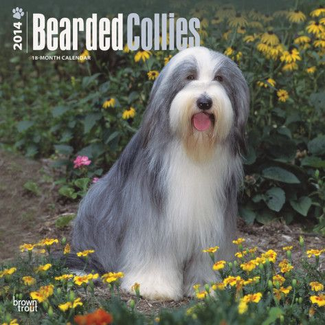 Bearded Collies 2014 Calendar Calendars Bearded Collie Collie