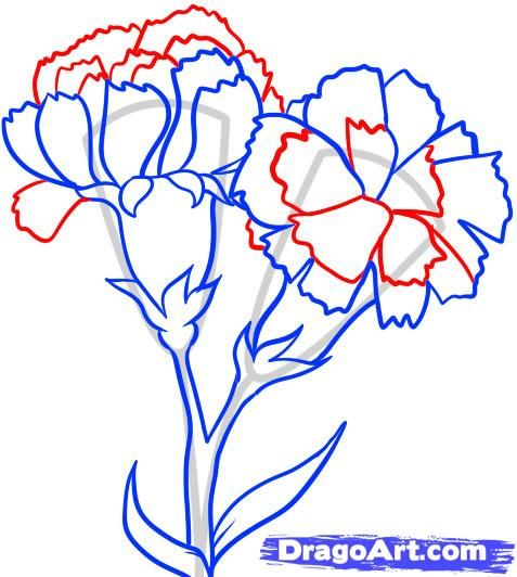 How To Draw Carnations Step By Step Flowers Pop Culture Free Online Drawing Tutorial Added By Da Flower Drawing Flower Drawing Tutorials Carnation Drawing