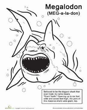 Color The Monstrous Megalodon Worksheet Education Com Megalodon Shark Coloring Pages Shark Activities
