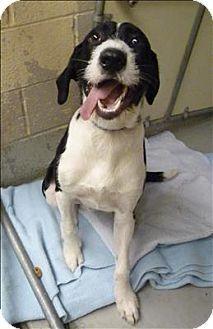 Adopt Axel On Dog Adoption Dog Love Labrador Retriever