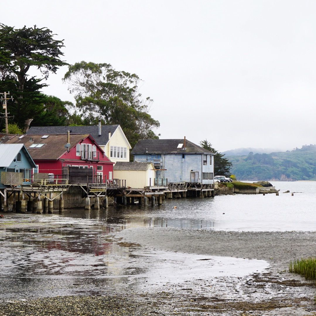 The view from Hog Island Oyster Farm