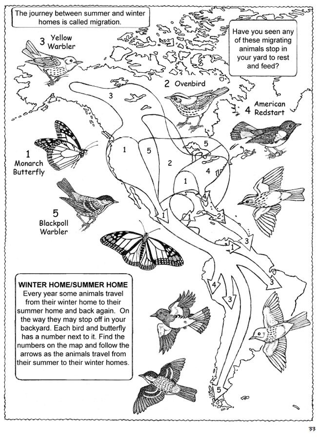 650 Bird Migration Coloring Pages Download Free Images