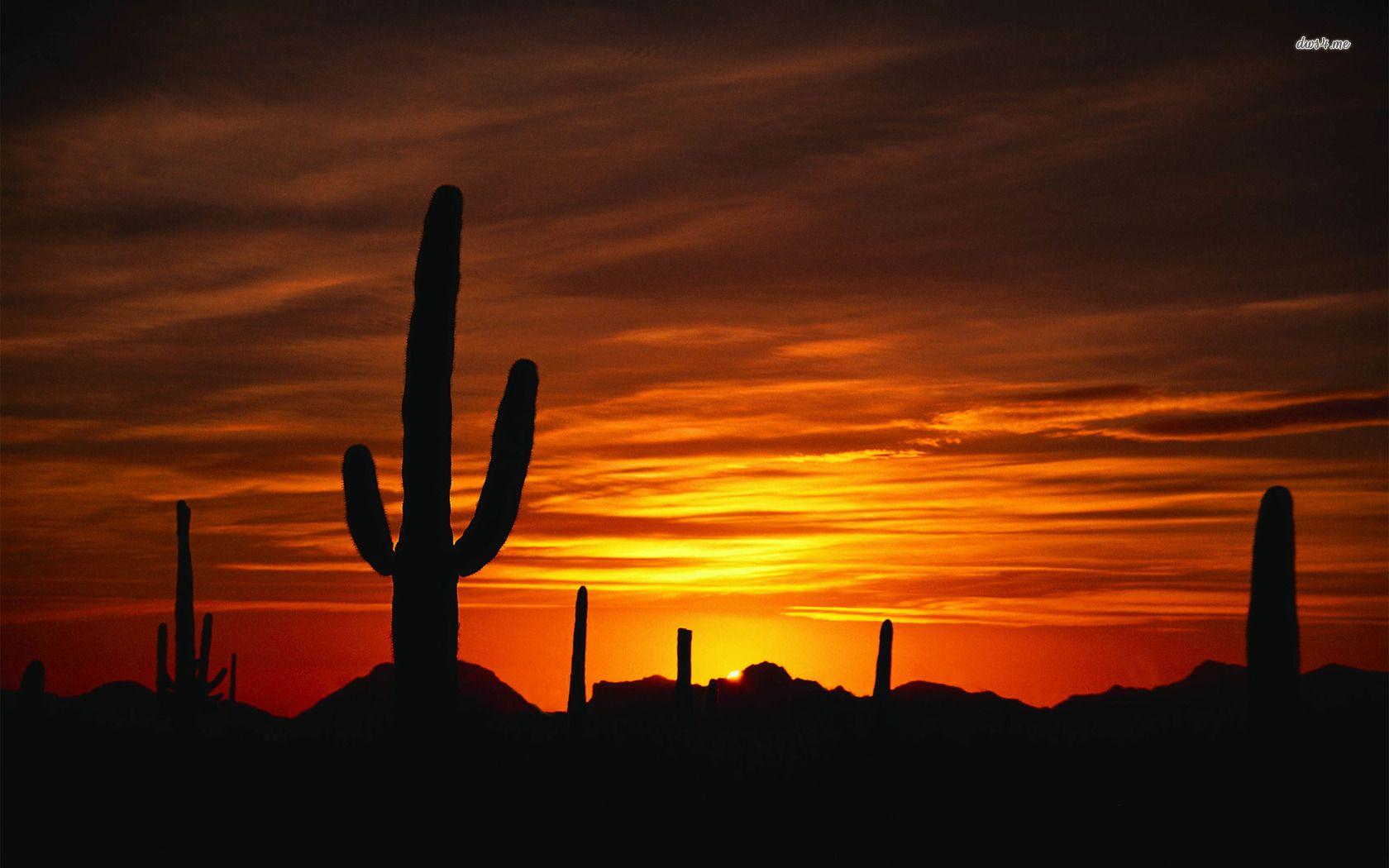 Sunset Over The Desert Hd Wallpaper Sunset Wallpaper Desert Sunset Sunset Hd wallpaper cacti evening sunset desert