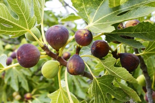 7 Easily Propagated Fruits for Transforming Your Backyard into a Food Forest