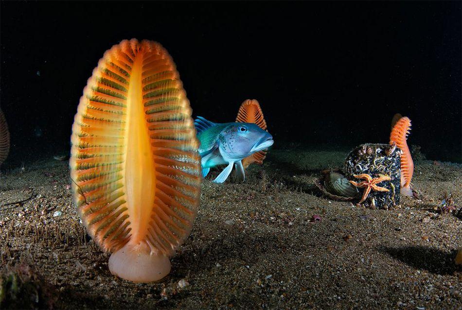 Gli scatti più belli dei maestri della fotografia subacquea
