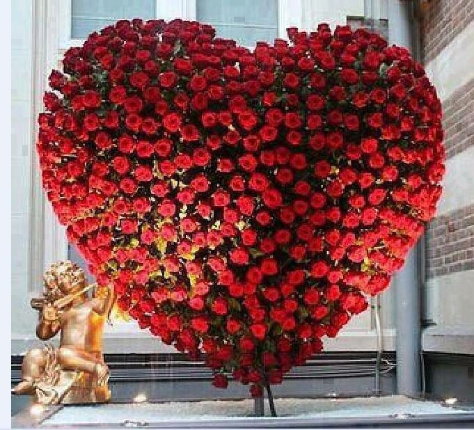 Bildergebnis für heart of red roses