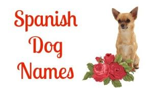 Top Dog Names See The Top List Of Boy And Girl Names Dog Names Top Dog Names Dogs Names List