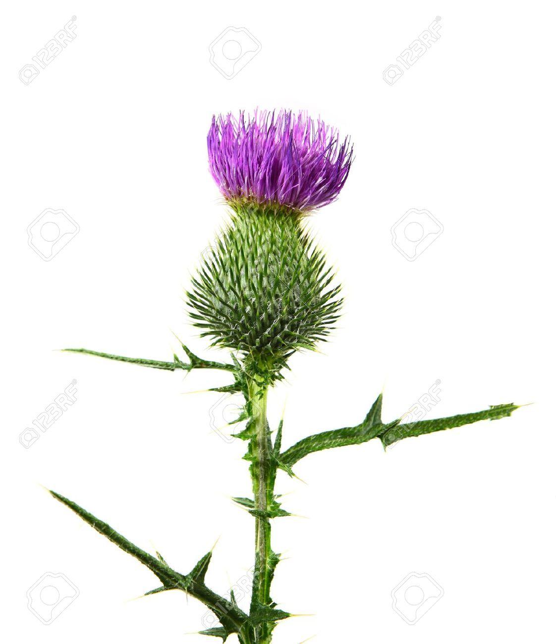 Kenneth McKellar - The Thistle Of Scotland - - YouTube