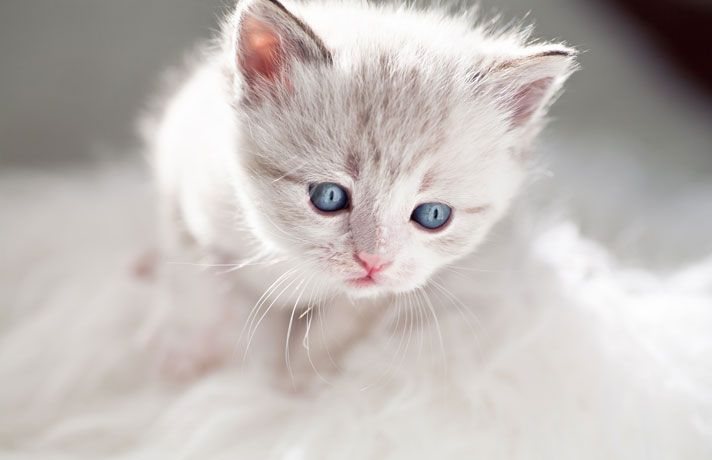 Do Kittens Eyes Change Color Petcha Kittens Cutest Cat Whiskers Cat Care