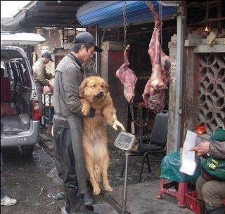 Dog meat trade . STOP these despicable nasty low-life primitive primal scumbags! This cultural practice is horrible. This man needs to be slaughtered and fed to his fellow scumbag abusers. His filthy primitive loser mother too...she gave birth to this abomination!