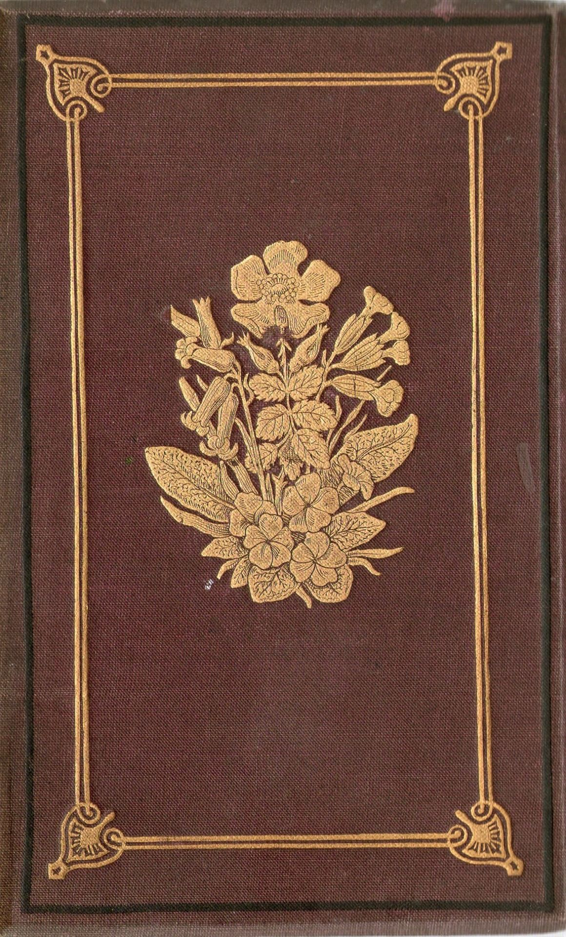 "michaelmoonsbookshop: ""gilt detail of the cover of Wild Flowers Where to Find Them and How to Know Them by Spencer Thompson published c1870 """