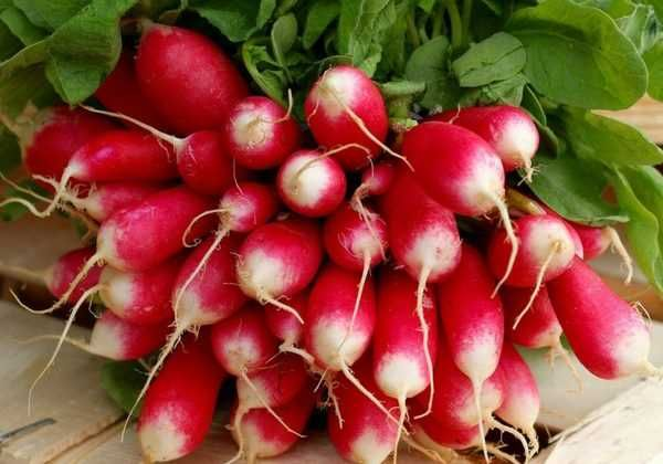 Le radis : semer, cultiver, récolter   Cultiver, Radis et ...