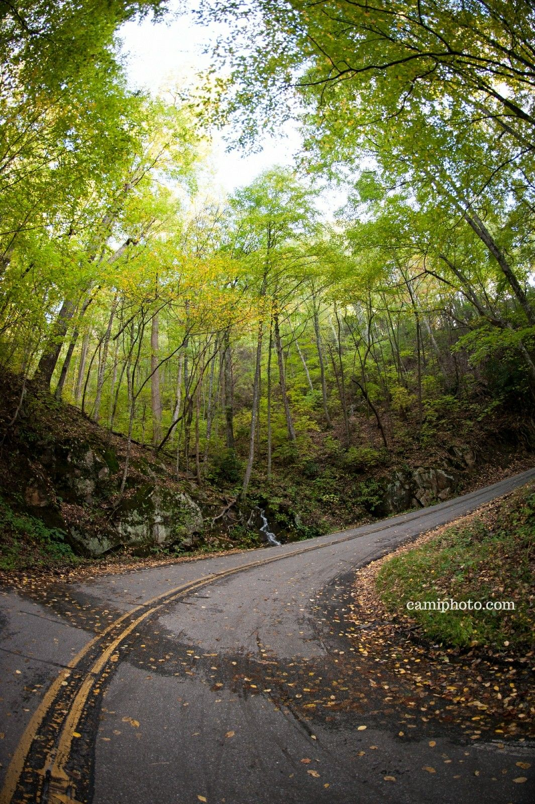 fall foliage surrounding a small waterfall on pisgah highway nc 151
