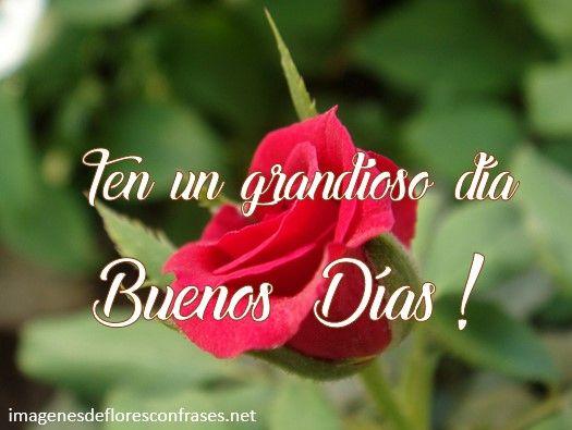 Imagen De Rosas Para Dar Los Buenos Días Palabras Sabias