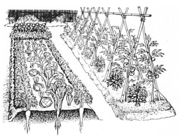 Asociaciones De Cultivos En La Huerta Orgánica Qué Es