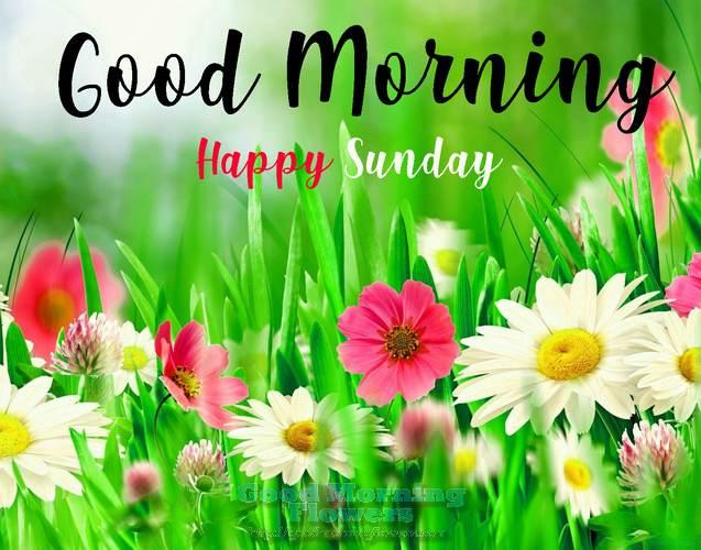 50 Sunday Good Morning Wishes Images Flowers Good Morning Flower Images Hd Free Downl Happy Sunday Morning Good Morning Happy Sunday Happy Sunday Quotes