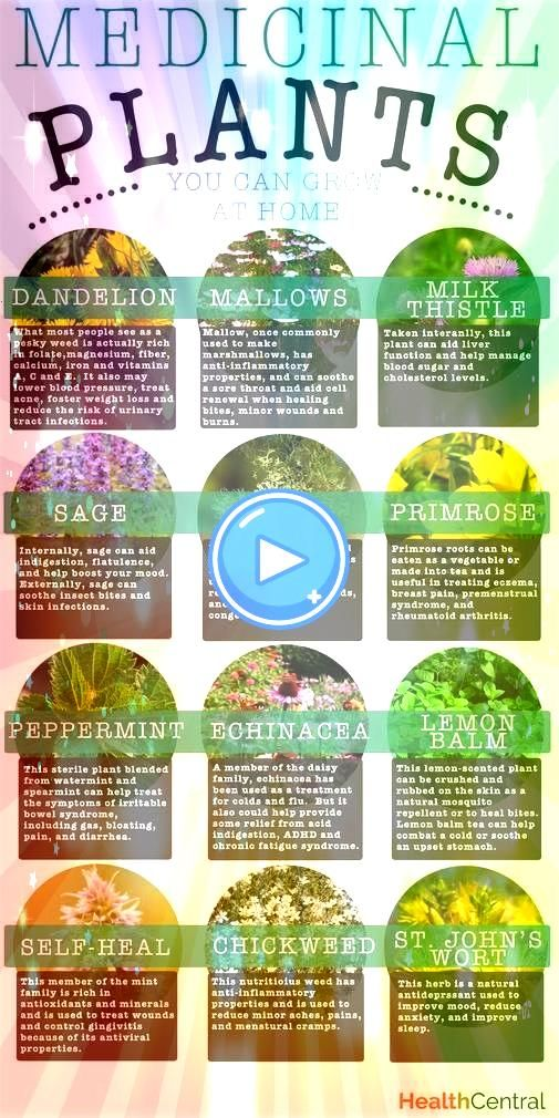 pharmacy is packed with hundreds of medicinal plants used in both Western and Chinese medical practices to treat a variety of conditionsNatures pharmacy is packed with hu...
