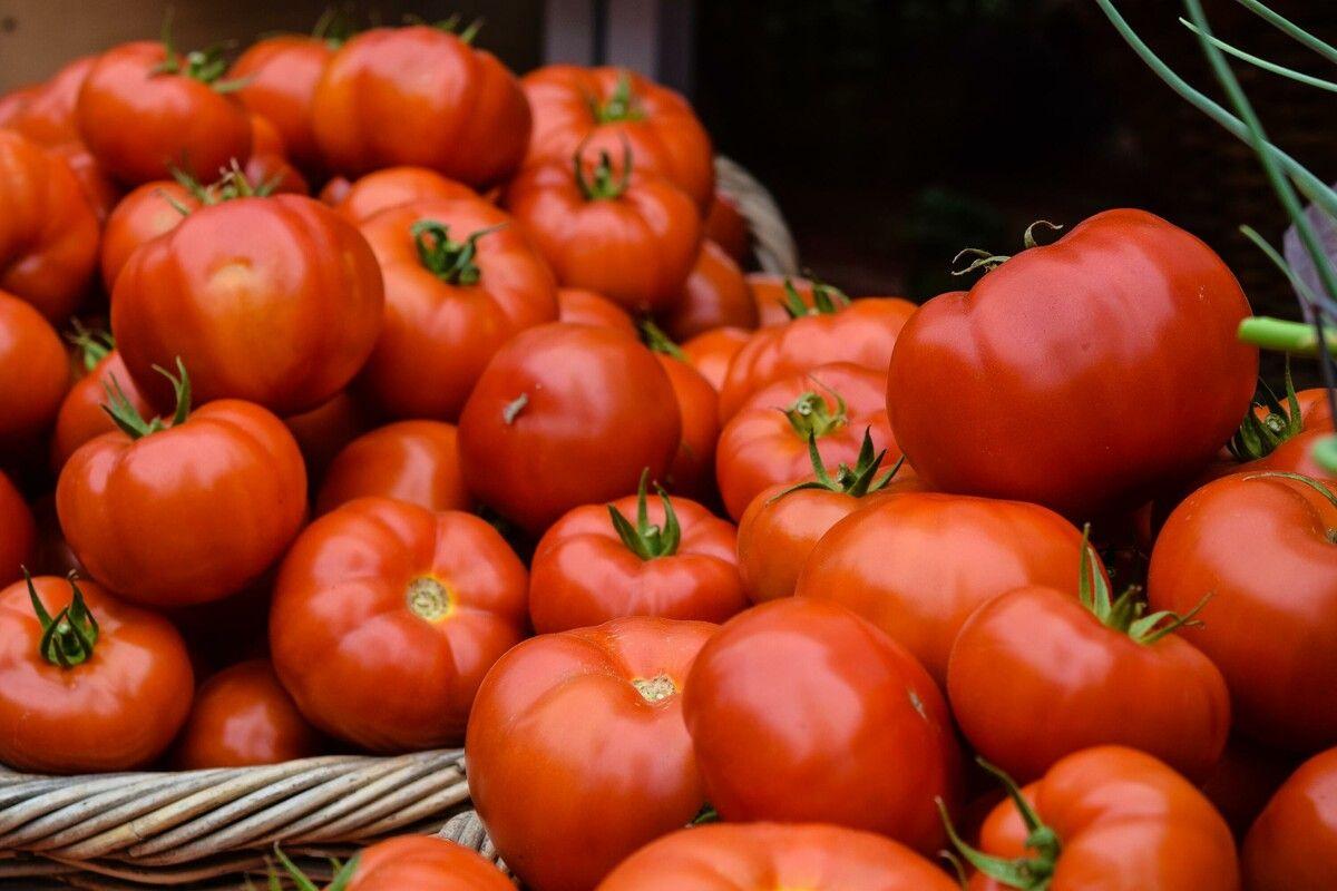 Wie Lassen Sich Frische Tomaten Im Sommer Konservieren Erfahrt Hier Mehr Zum Trocknen Einkochen Einlegen Un In 2020 Tomaten Haltbar Machen Tomaten Tomaten Einkochen