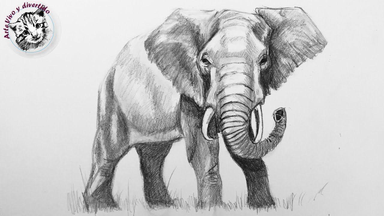 Como Dibujar Un Elefante Realista Con Lapiz Muy Facil Y Paso A Paso Dibujos De Elefantes Como Dibujar Animales Dibujo De Elefante