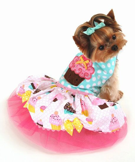 78 Best images about small dogs birthday dress on Pinterest ...