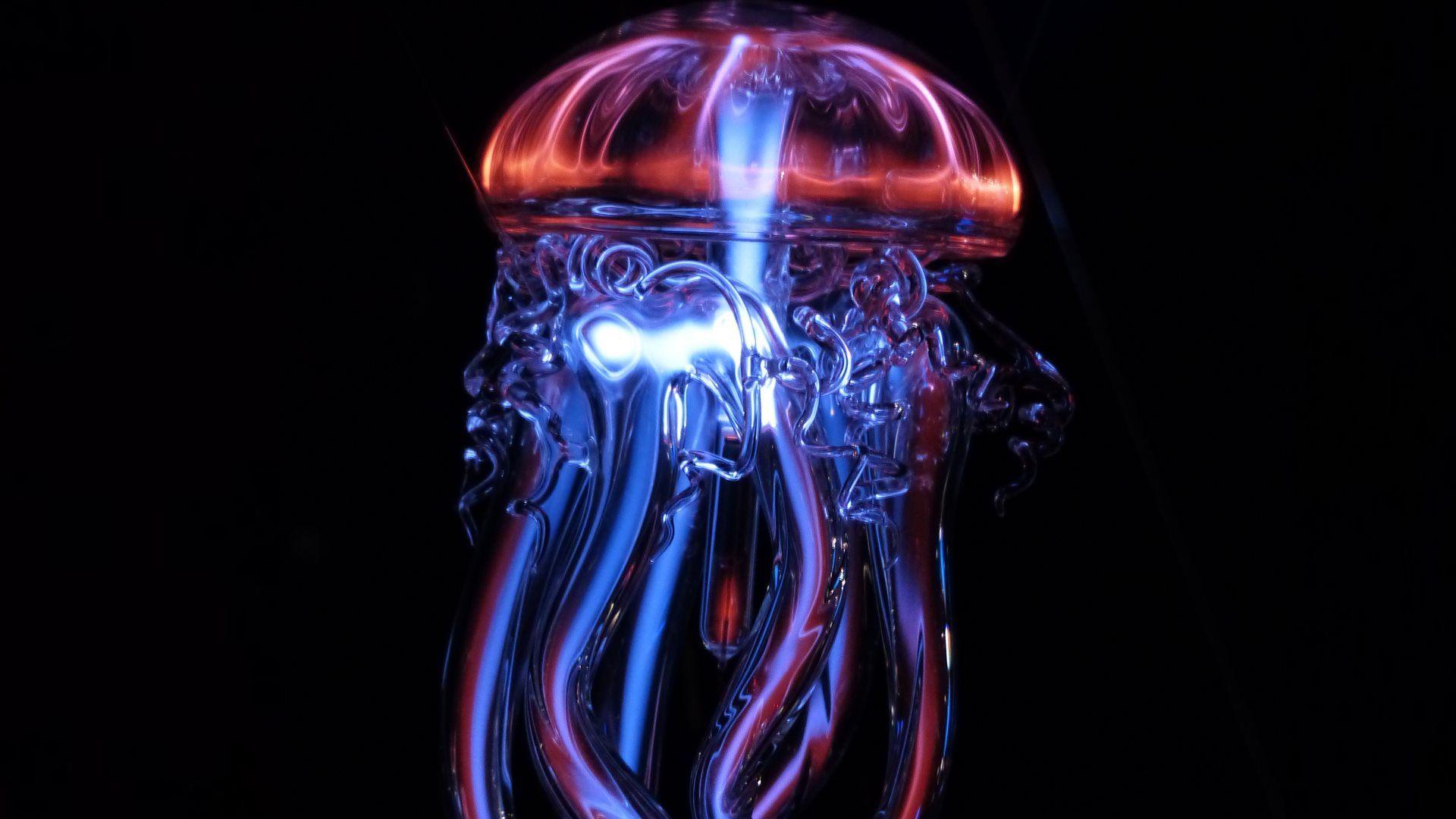 Moon jellyfish 4K Ultra HD Wallpaper High Definition HD