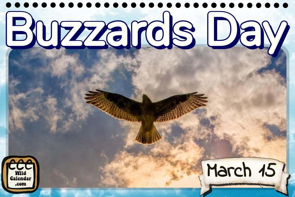 12++ Buzzard day ideas