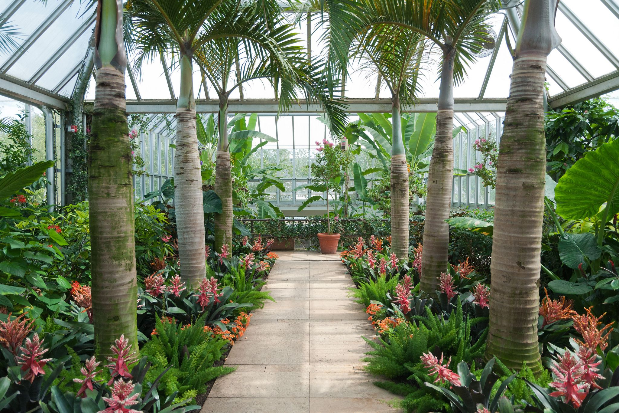 Tropical Greenhouse