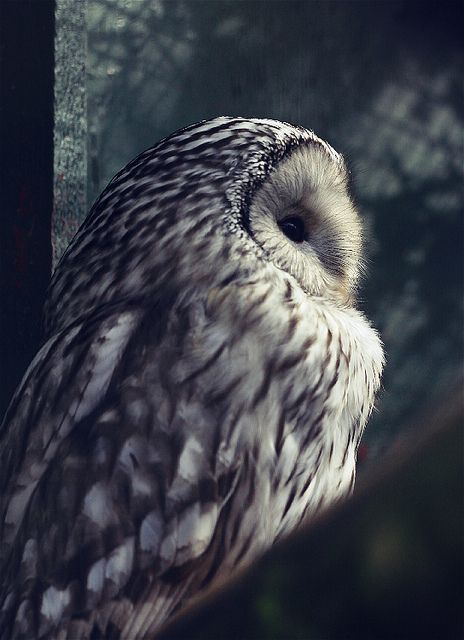Owl by FSGPhotography, via Flickr