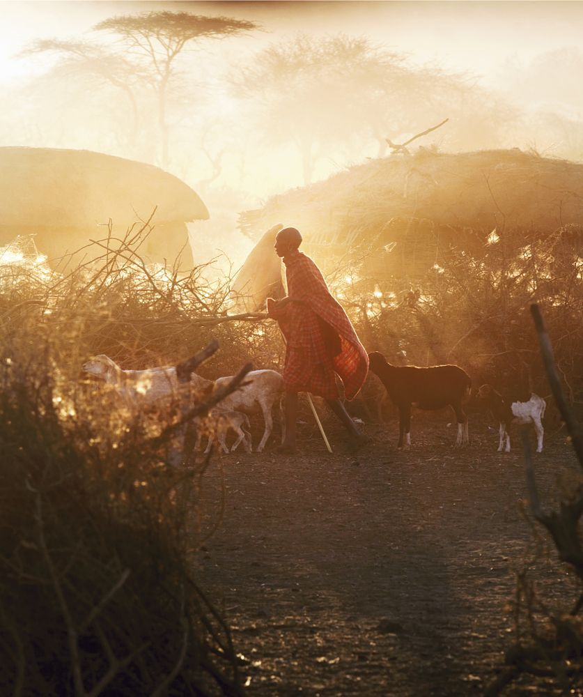 Kenya Goat Herder by Philip Lee Harvey | photos | Pinterest
