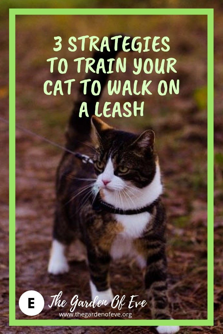 Adventure Cat Training Adventure Cat Cat Training Cat Leash