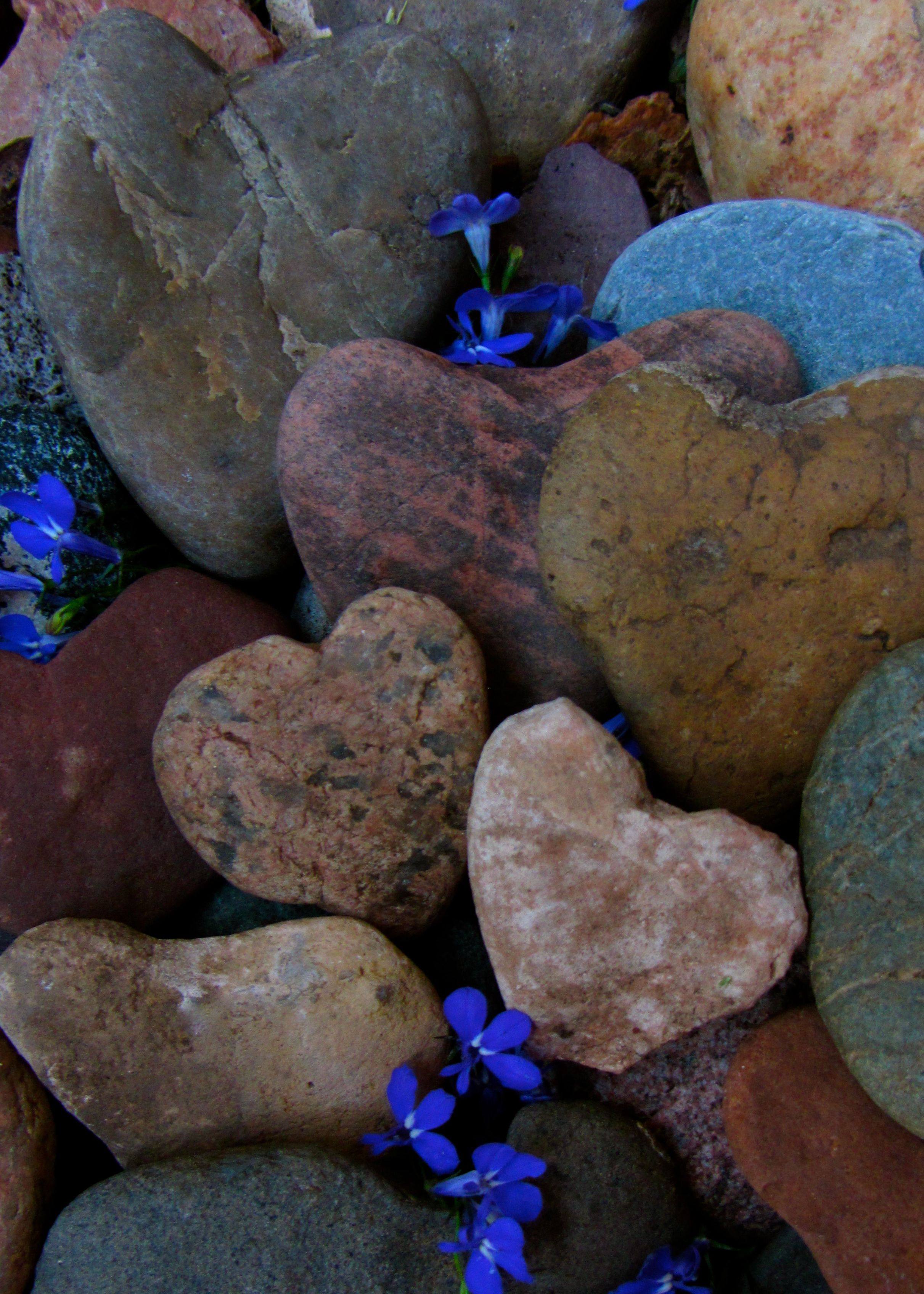 I have so many heart rock's I want to find a cute way to display them @Joann Luna  any Idea's for me???
