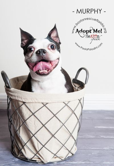 Paola Paladini Pet Photography Miami Pet Photography Broward Pet Photography Palm Beach Pet Photography With Images Animal Rescue