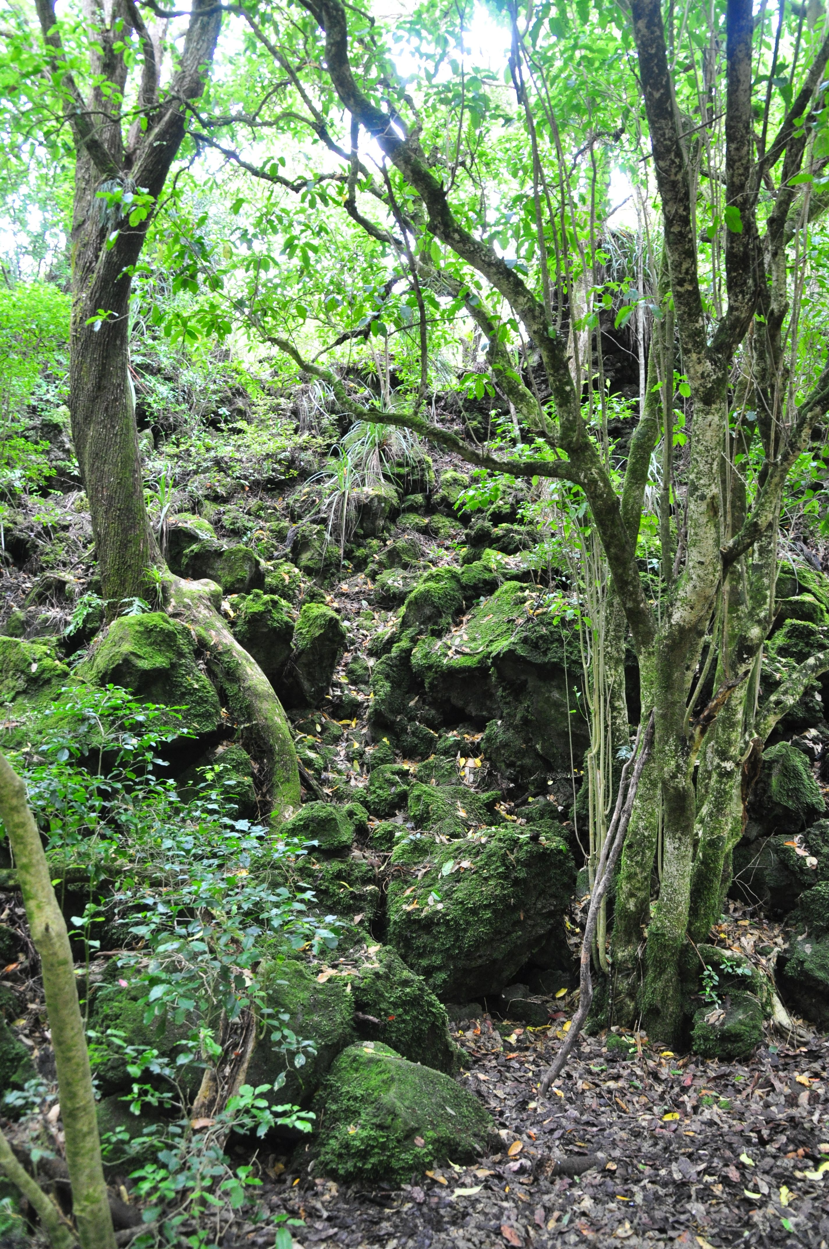 Rangitoto Island, Auckland, New Zealand. This walk was amazing.  Those black rocks are molten lava after hundreds of years