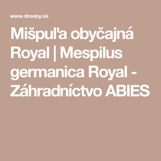 Mišpuľa obyčajná Royal   Mespilus germanica Royal - Záhradníctvo ABIES