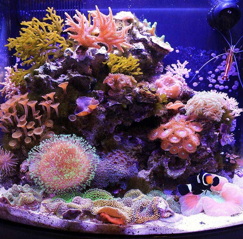 Gena S 12gal Jbj Nanocube Nano Reef May 2012 Featured Reef Aquarium Saltwater Aquarium Saltwater Fish Tanks Reef Aquarium