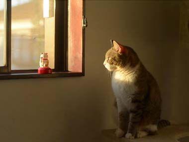 ネコが窓辺で「招き猫」の真似をしていました・・・ - http://iyaiyahajimeru.jp/cat/archives/59622
