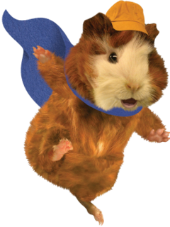 Pin On Linny The Guinea Pig