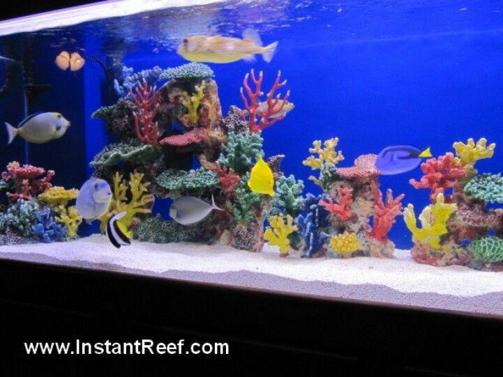 Salt Water Aquarium Aquarium Salt Water Fish Aquarium Fish