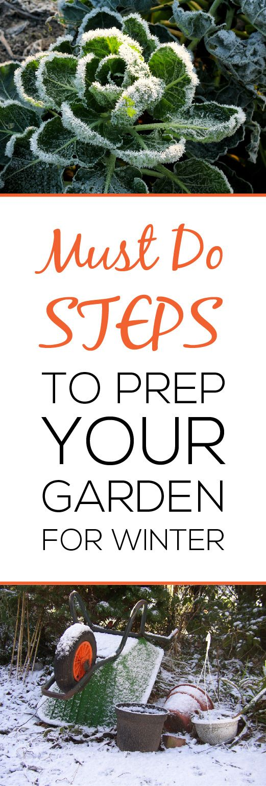 4 must do steps to prep your garden for winter plants summer